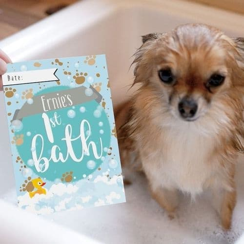 Personalised New Puppy Photo Cards Moments