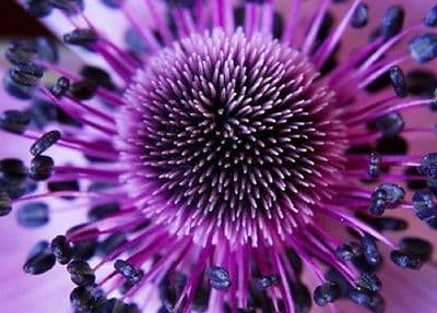Wall mural PURPLE FLOWER CLOSE UP photo wallpaper Large size wall art 254x183cm