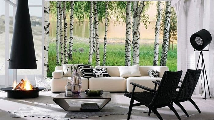 White birch trees forest wall mural wallpaper