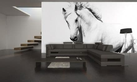 XL White horse mustang wall mural