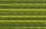 4066 Fresh Cut Grass - DMC Color Variation Thread