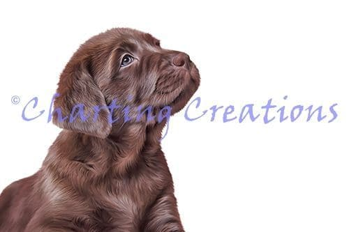 Charting Creations Chocolate Lab Puppy printed cross stitch chart