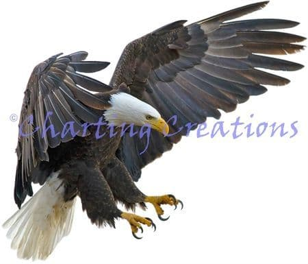 Charting Creations Eagle in Flight printed cross stitch chart