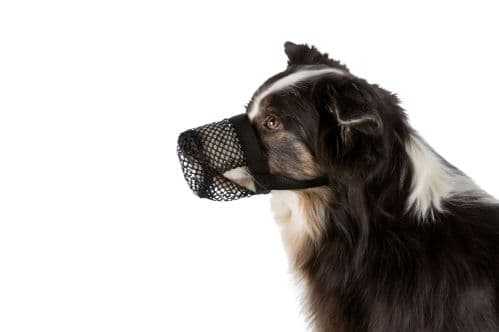 Trixie New Protection Dog Poison Bait Muzzle - All Sizes - All Dogs